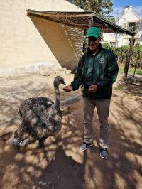Stoffie our Dwarf Ostrich