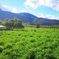 Alfalfa Land, Cango Ostrich Show Farm